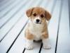 Kennel club: ~Doggies' Daycare~ Kennel Club