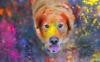Kennel club: The Artistic Pup Kennel Club