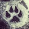 Kennel club: Frost Wolf Kennels