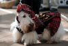 snapesgirl - Dogzer dog breeder