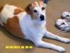Buster5 - Dogzer dog breeder
