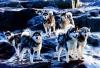 tayekehinde - Dogzer dog breeder