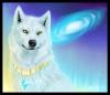 ChowiePuppy - Dogzer dog breeder