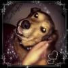southernbellattitude - Dogzer dog breeder