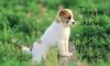 poday - Dogzer dog breeder
