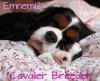 emnem12 - Dogzer dog breeder
