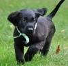 ChanelSea - Dogzer dog breeder
