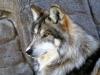 Luna505 - Dogzer dog breeder
