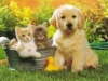 panda090304 - Dogzer dog breeder