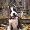 KidKrazy97641 - Dogzer dog breeder