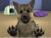 REALDOGLOVER - Dogzer dog breeder