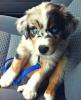 emonyrules146 - Dogzer dog breeder