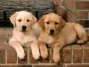 madelynn23 - Dogzer dog breeder