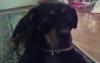 doggieluving - Dogzer dog breeder