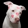 wearedoglovers101 - Dogzer dog breeder