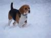 Keayona - Dogzer dog breeder