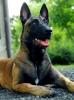 Splashstorm - Dogzer dog breeder