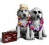 littlepuppy545 - Dogzer dog breeder