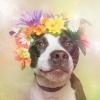 Emily1610 - Dogzer dog breeder