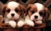 KloClo - Dogzer dog breeder