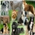 Pure Dog Breeders Group