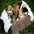 Animals Adoption and Foster