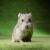 Hamster insight