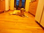 MAGGIE - Cerberus (legendary dog) (8 years)