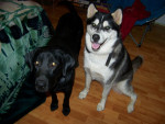 Bandit and max - Male