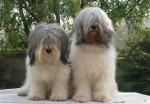 Buzia et Ronny - Polish Tatra Sheepdog