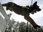 Zuyaqui - German Shepherd Dog