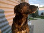 Yohko - German Shepherd Dog (10 years)