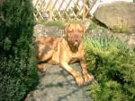 Vidocq - Bordeaux Mastiff