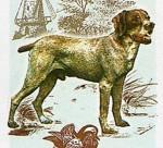 Burgos Pointer picture