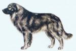 Berger du Karst - Karst Shepherd