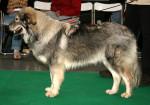 Karst Shepherd picture