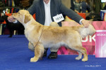 Run And Hunt Brdske zlato - Golden Retriever (2 years and 9 months)