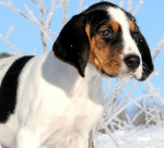 Halden Hound picture