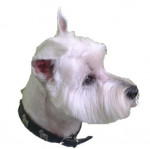 BIANCA - West Highland White Terrier (10 years)
