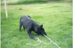 Princesa de pequeña - Deutscher Wachtelhund (5 months)