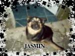 JASMIN - Deutscher Wachtelhund (5 months)