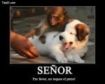 mono y perro - German Spaniel