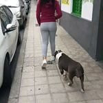 Amira - American Staffordshire Terrier (3 years)