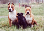 skipie et ses gardes du corps - Male Kerry Blue Terrier (2 months)