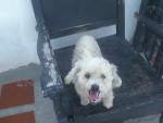 didsy - Puggle (6 years)