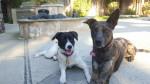 Lilly & Kiah - Catahoula cur (2 years)