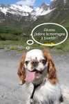 fébus - Male King Charles Spaniel (4 years)