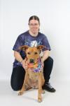 Serenity - Redbone Coonhound (4 years)