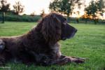 Münster - Male Patterdale Terrier