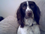Milo - Male (2 years)